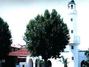 Şifa məscidi